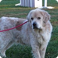 Adopt A Pet :: Bo - Unionville, PA