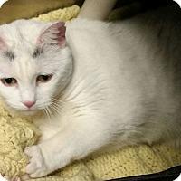 Adopt A Pet :: Charcoal - Union, NJ