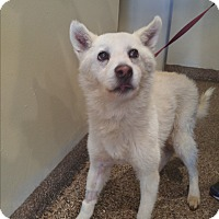 Adopt A Pet :: Moonkie - LAKEWOOD, CA
