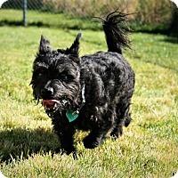 Adopt A Pet :: Butch - corinne, UT