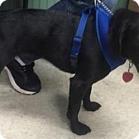 Adopt A Pet :: Maggie - Clarkesville, GA