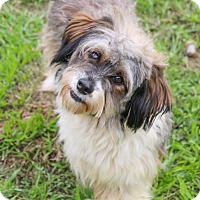 Adopt A Pet :: Baxter - Pipe Creed, TX