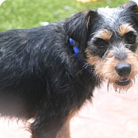 Adopt A Pet :: Chester - Bedminster, NJ