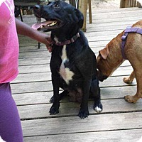 Adopt A Pet :: Lady - Acworth, GA