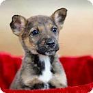 Adopt A Pet :: PUPPY SIERRA
