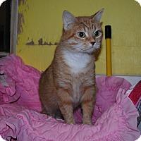 Adopt A Pet :: Amber - Bay City, MI