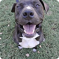 Adopt A Pet :: Deuce - Gilbert, AZ