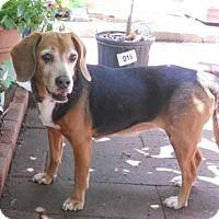 Adopt A Pet :: Millie - Waldorf, MD