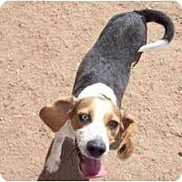Adopt A Pet :: Goose - Phoenix, AZ