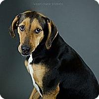 Adopt A Pet :: Genevieve - Muskegon, MI