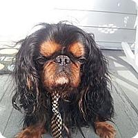 Adopt A Pet :: Teddy - Cumberland, MD