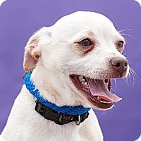Adopt A Pet :: Bruno - Anaheim, CA
