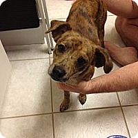 Adopt A Pet :: Ralph - Kingwood, TX