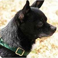 Adopt A Pet :: Odie - Rigaud, QC