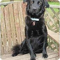 Adopt A Pet :: Hattie - Kingwood, TX