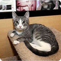 Adopt A Pet :: Misty - Farmingdale, NY