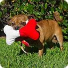 Adopt A Pet :: Cute little Mo-VIDEO