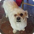 Adopt A Pet :: Patsy