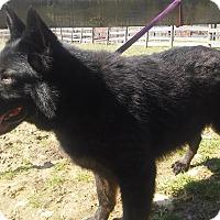 Adopt A Pet :: Sophie - Louisville, KY