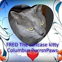 Adopt A Pet :: Fred - Woodstock, GA