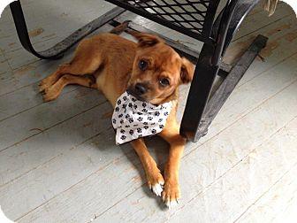 Rescue Shelter For Dogs Cedar Rapids Iowa