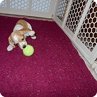 Adopt A Pet :: Holly -Adopted! - Kannapolis, NC