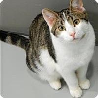 Adopt A Pet :: Sammy - Topeka, KS