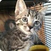 Adopt A Pet :: Baby Boy - Breinigsville, PA