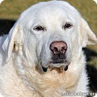 Adopt A Pet :: Emma - new! - Beacon, NY