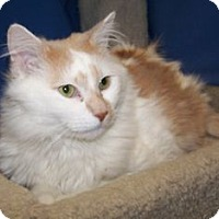 Adopt A Pet :: Calvin - Colorado Springs, CO