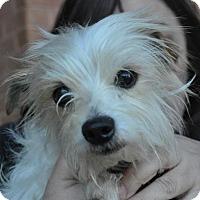 Adopt A Pet :: Freddie - Atlanta, GA