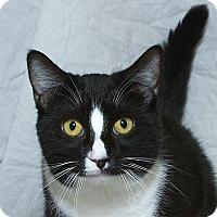 Adopt A Pet :: Jack V - Sacramento, CA