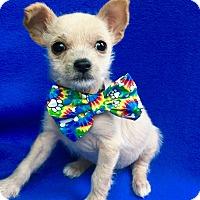 Adopt A Pet :: Beep Beep - Irvine, CA
