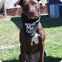 Adopt A Pet :: Denver - Shelburne, VT