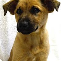 Adopt A Pet :: Alyse - Brunswick, ME