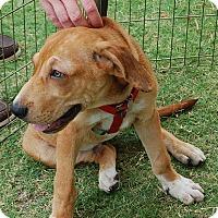 Adopt A Pet :: Eddie Donut - Memphis, TN