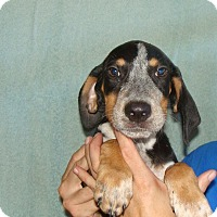 Adopt A Pet :: Tuffy - Oviedo, FL