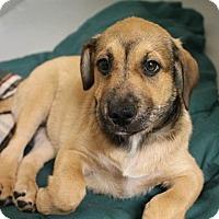 Adopt A Pet :: Princess - Bernardston, MA