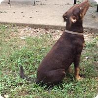 Adopt A Pet :: Robbie - Albany, NY