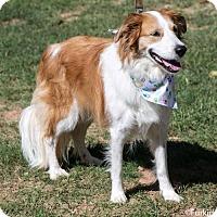 Adopt A Pet :: Delta - Atlanta, GA