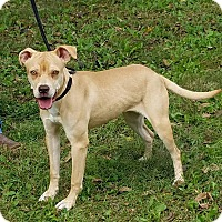 Adopt A Pet :: Chloe - Atchison, KS