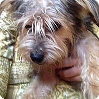 Adopt A Pet :: Buzz - Memphis, TN