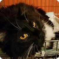 Adopt A Pet :: Midas - Ennis, TX
