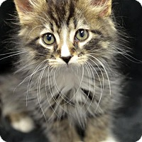 Adopt A Pet :: Biscotti161720 - Atlanta, GA