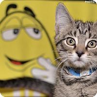 Adopt A Pet :: Sporty Spice - Medina, OH