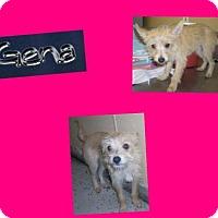 Adopt A Pet :: GENA - Plano, TX