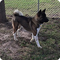 Adopt A Pet :: Apollo - Point, TX