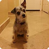 Adopt A Pet :: Neesa - Phoenix, AZ