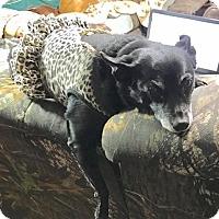 Adopt A Pet :: Gi Gi - Melrose, FL