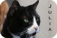 Domestic Shorthair Cat for adoption in Union Lake, Michigan - Julia>^.,.^< $35 adoption